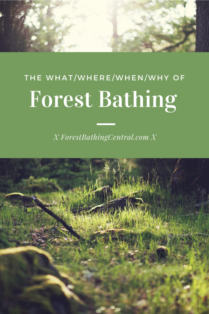 What is forest bathing and how do you do it?